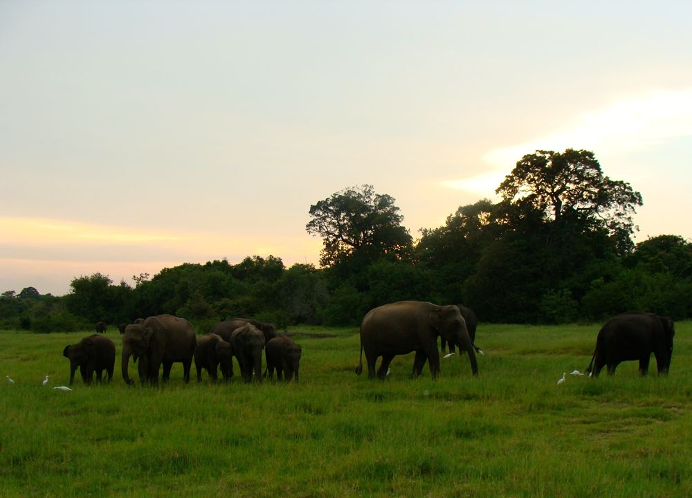 Elephant Sanctuary in Sri Lanka