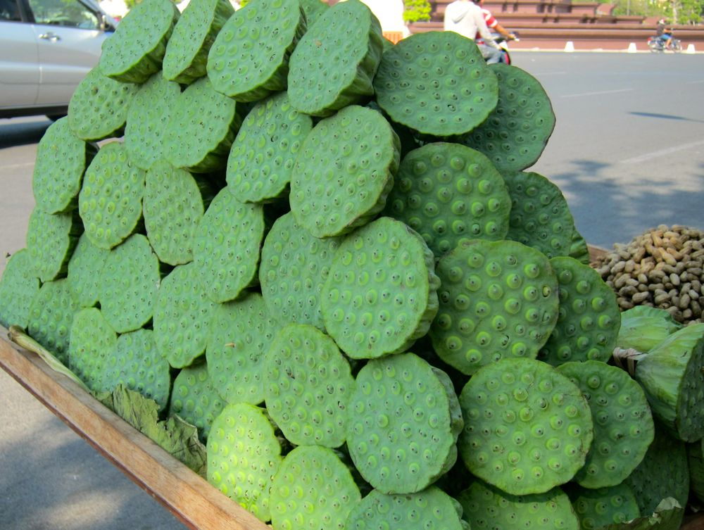 Lotus Seeds: Favourite Snack in Cambodia