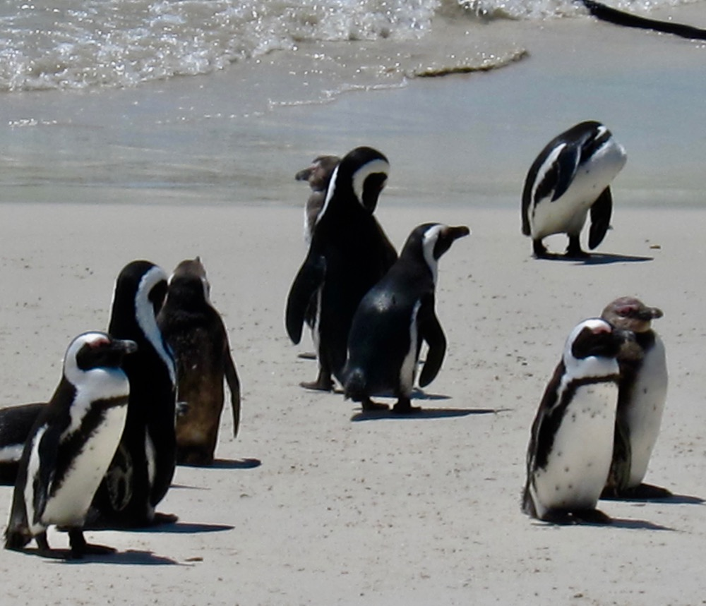 Sunning Penguins