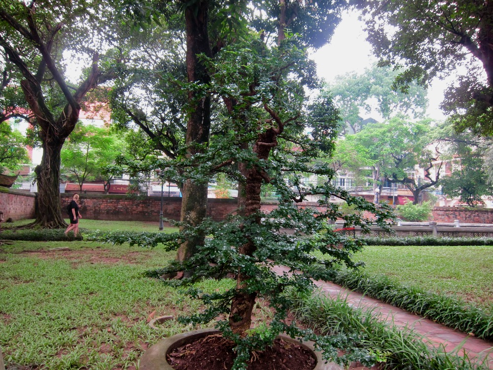 Garden in the Temple of Literature